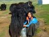 milkingyak